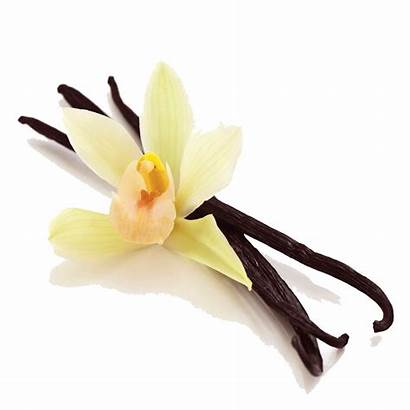Vanilla Bean Icon Freepngimg 1055