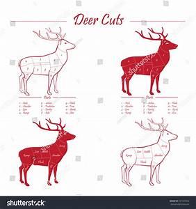 Deer Venison Meat Cut Diagram Scheme Stock Vector 231507652