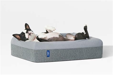 sweet dreams     casper introduces  dog