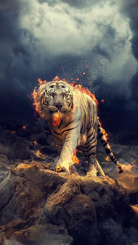 Wallpaper For by Raging White Tiger Wallpapers Hd Wallpapers Id 25213