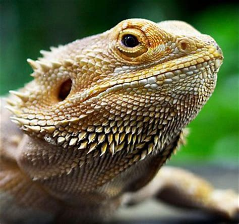 Reptile Heat Ls Petsmart by Reptile Care Guides Petsmart
