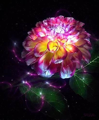 Magic Flower Deviantart Favourites