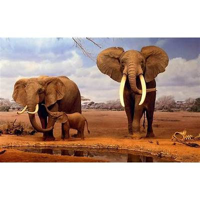 AFRICAN ELEPHANTS HD WALLPAPERSFREE WALLPAPERS