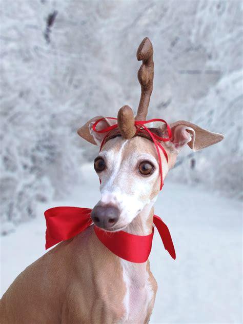 max  grinch dog head antler  christmas pets dog