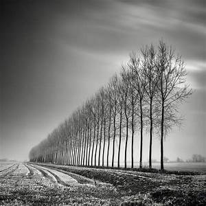 black and white autumn photography xcitefun net