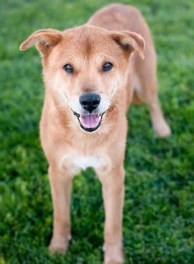 Adoptable Senior  Ee  Dog Ee   Of The Week Ranger Grouchy Puppy Blog