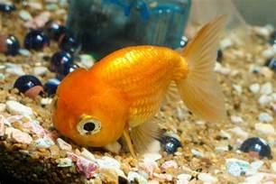 Funny Pet Fish Names