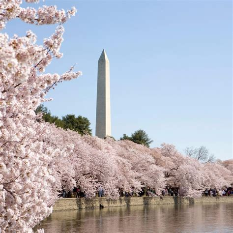 washington dc spring wallpapers wallpaper cave