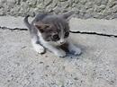 Funny cats - part 32 (25 pics + 10 gifs) | Amazing Creatures