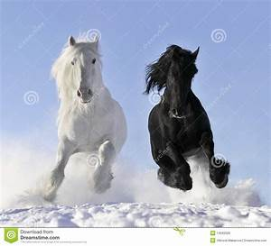 White and black horse stock photo. Image of freedom ...