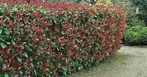 Schnellwachsende Pflanzen Als Sichtschutz : die besten heckenpflanzen mein sch ner garten ~ Whattoseeinmadrid.com Haus und Dekorationen