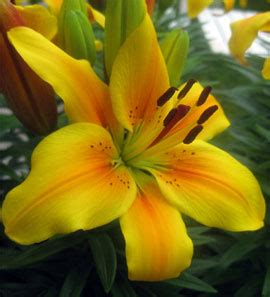 golden hallson gardens