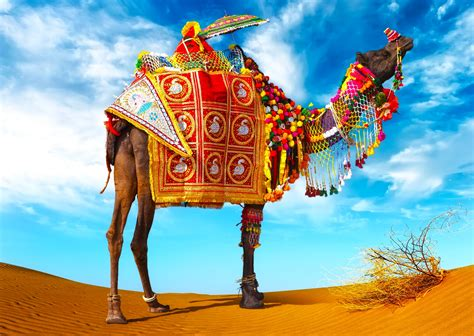 Camel Decoration Amazing Image  New Hd Wallpapernew Hd