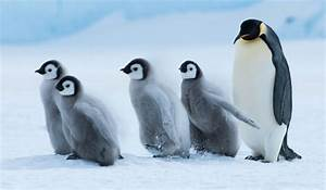 New book reveals real world of penguins | Stuff.co.nz