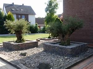 Olivenbaum Im Wohnzimmer überwintern : olivenbaum fest pflanzen der olivenbaum in deutschland ~ Markanthonyermac.com Haus und Dekorationen