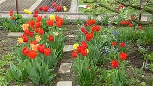 Tulpen Im Garten : garten tulpe tulipa gesneriana ~ A.2002-acura-tl-radio.info Haus und Dekorationen