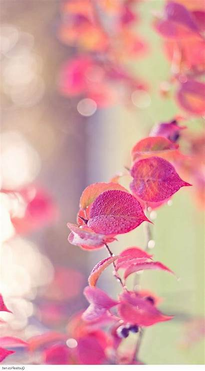 Girly Wallpapers Iphone Cool Pretty Pantalla Flower