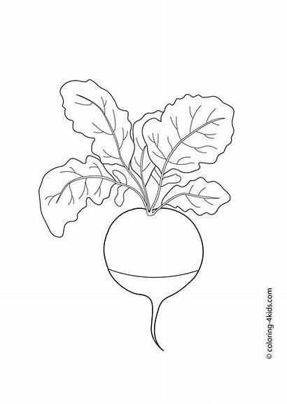 Radish Coloring Pages Drawing Potato Vegetables Vegetable