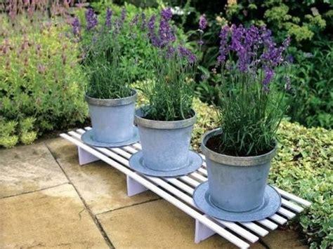 lavanda in vaso lavender garden of me