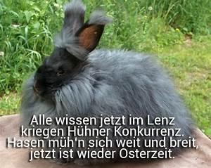 Ostergrüße Per Whatsapp : lustig whatsapp bilder search results calendar 2015 ~ Frokenaadalensverden.com Haus und Dekorationen