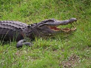 Seawater Bacteria Death, Flasher on Campus, 2-Headed Gator ...