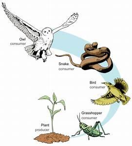 Unit 4 - Ecosystems  U0026 Biodiversity
