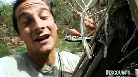 bear grylls eats alive spider youtube