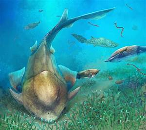 Qilinyu rostrata: Silurian Fish from China Sheds Light on ...  Silurian