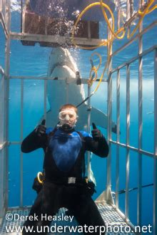 experience your own shark week by cage diving with a great white shark