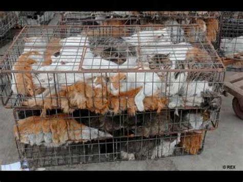 maltraitance des animaux stop y en a marre