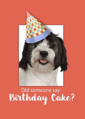 cute dog  wearing  birthday hat  happy birthday ecards