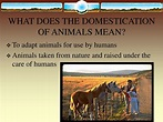 PPT - DOMESTICATION AND IMPORTANCE OF LIVESTOCK PowerPoint ...