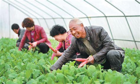 liu xiaoyang  vegetable farmer  chengxian gansu