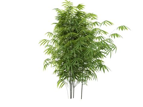 bambusoideae bamboo 3d 3dsmax files free