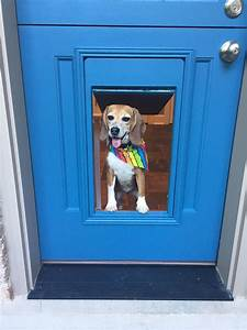 rescue beagles a life away from the lab wnij and wniu With dog doors that keep other animals out