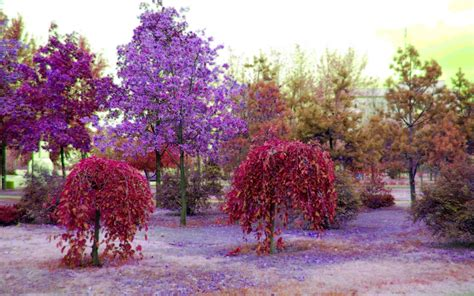 colourfull tree colorful nature colorful nature wallpaper garden idea and flowers pinterest nature wallpaper