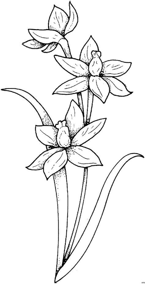 pflanze mit knospen ausmalbild malvorlage blumen