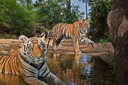 Geographic National Animals Wildlife Camera Trap Winter