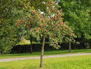 Kleine Bäume Für Garten : baum kleiner garten ~ A.2002-acura-tl-radio.info Haus und Dekorationen