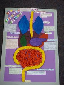 School 3d Art Project Digestive System