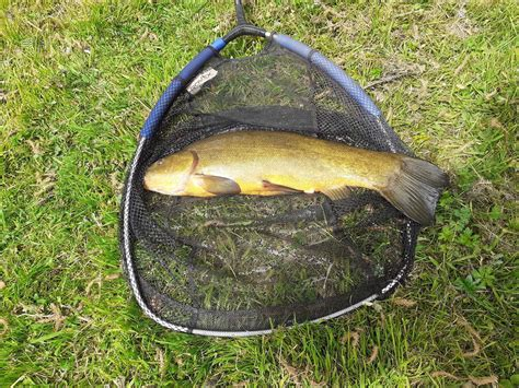 stortford angling bishop district society catches government fishing resumes guidelines waters under