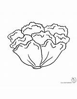 Lettuce Coloring Pages Fresh Food sketch template