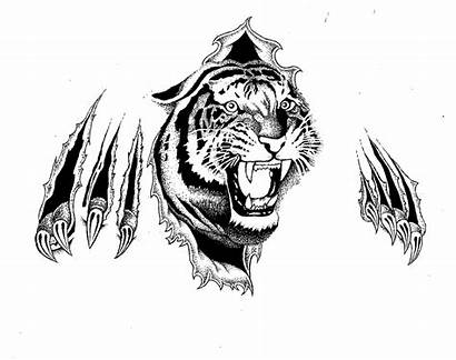Tiger Tattoo Background Stencils Flash Tearing Wallpapers