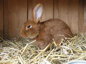 Was Tun Gegen Hausstaubmilben : milben beim kaninchen bek mpfen ratgeber hilfe was tun ~ Frokenaadalensverden.com Haus und Dekorationen