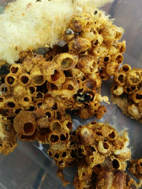 Creating Nests for Native Bees - ABC Bees