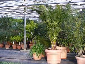 Balkonblumen Richtig Pflanzen : balkonpflanzen berwintern so berwintern sie ihre pflanzen richtig ~ Frokenaadalensverden.com Haus und Dekorationen
