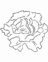 Lettuce Coloring Lechuga Colorear Colorare Printable Insalata Verduras Vegetales Disegni Dibujo Imagenes Dibujos Disegno Vegetables Hojas Dibujar Pintar Hoja Bambini sketch template