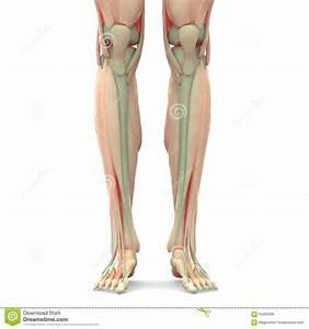Leg Joints Gallery