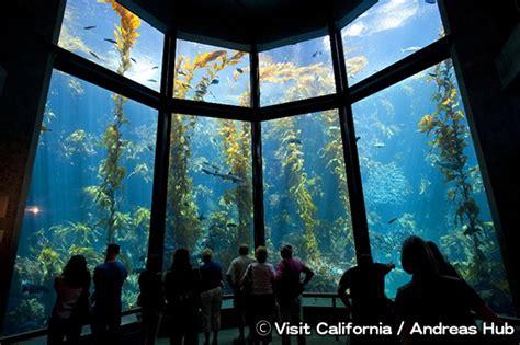 モントレー・ベイ水族館 Monterey Bay Aquarium | アメリカ 旅行 観光 情報サイト|Link-USA