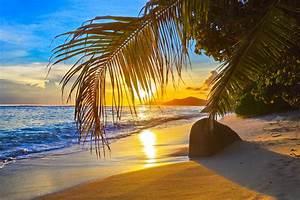 Bilder Von Palmen : fotos von strand meer natur palmengew chse ~ Frokenaadalensverden.com Haus und Dekorationen